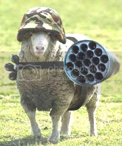 051129_Sheep.jpg