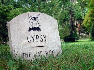 ist2_112107_gypsy_the_dead_cat2.jpg